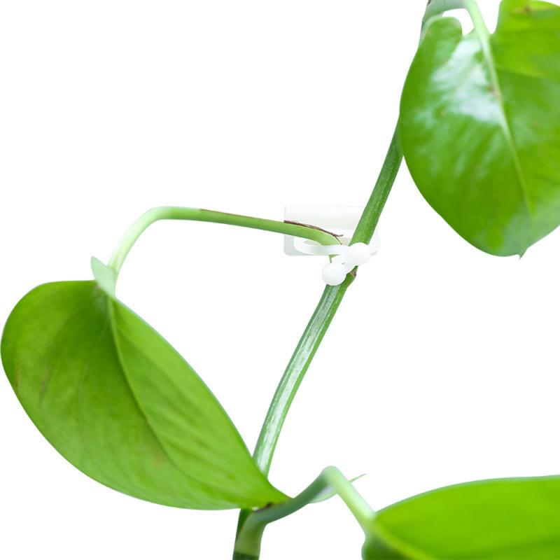 10pcs Invisible Wall Rattan Clamp Clip Invisible Wall Vine Climbing Sticky Hook Rattan Fixed Clip Bracket Plant Stent Supports 3