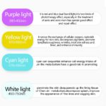 7 Colors Electric Facial LED Photon Light Therapy 5