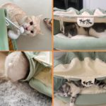 Collapsible Cat Tunnel Tube  4